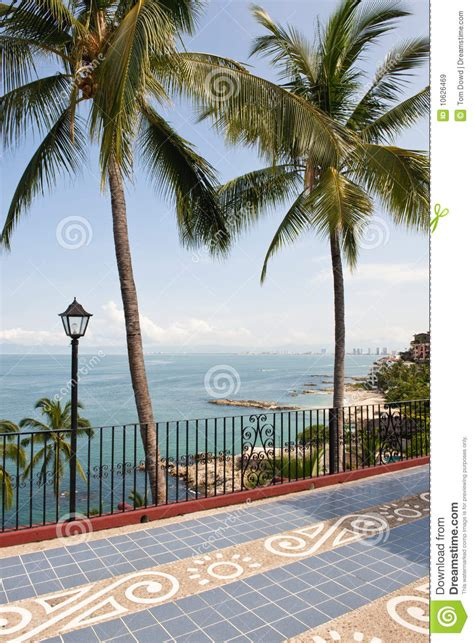 palms trees and patio by ocean royalty free stock images