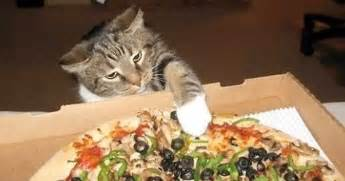 cat pizza sneaky cat burglars trying to pizza