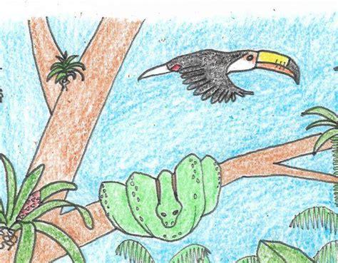 rainforest animals  plants coloring page rainforest alliance