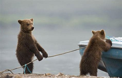 Proof Bears Are Just Big, Furry People