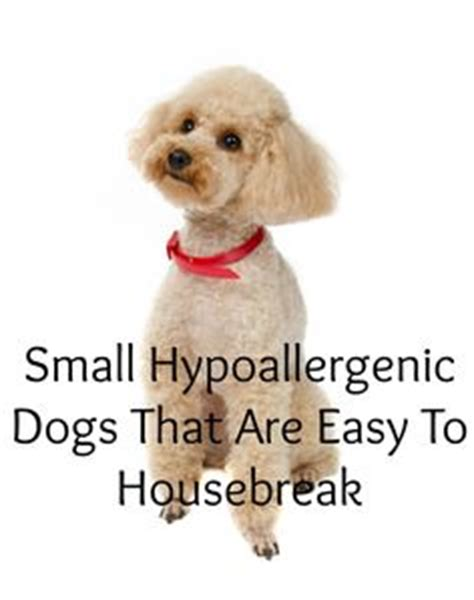 Small Non Shedding Dogs Easy To by Hypoallergenic Puppies On Non Shedding Dogs