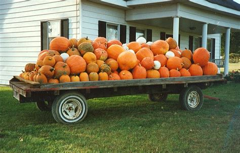 Pumpkin Patch Madison Wi by Download Pumpkin Patch Madison County Ky Free