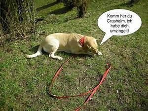 Hund Im Garten Vergraben : hund im eigenen garten anbinden seite 8 sonstiger ~ Lizthompson.info Haus und Dekorationen