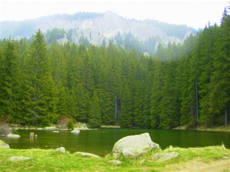 Evergreen Forest  Forests & Nature Background Wallpapers