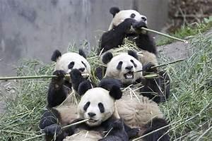 e-Sim - Pandas