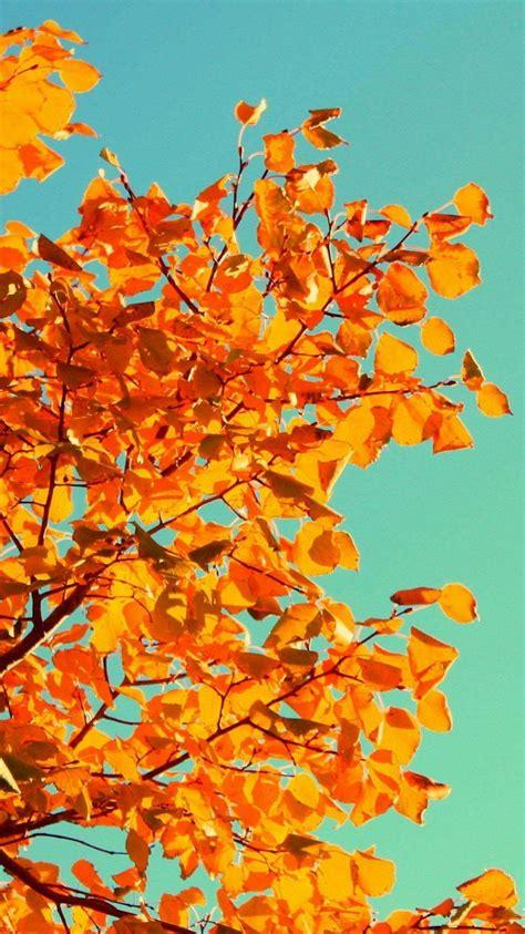 Orange Fall Wallpaper by Autumn Fall Orange Tree Leaves Iphone 6 Wallpaper Hd
