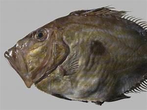 Pescados Y Mariscos Gallegos Online