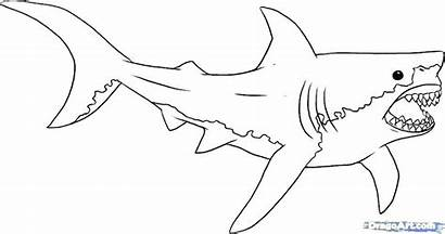 Shark Coloring Megalodon Pages Jaws Drawing Bull