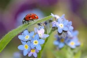Kleine Blütenwunder Vergissmeinnicht Gartenzauber