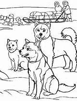 Coloring Alaska Alaskan Malamute Rush Colouring Dogs Sheets Getcolorings Printable sketch template