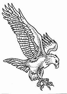 disegno aquila da colorare disegno falco da colorare