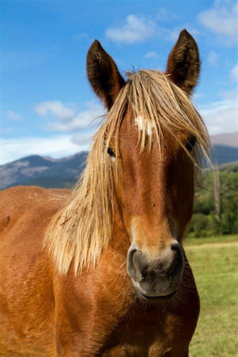 treating bumps  horses face thriftyfun