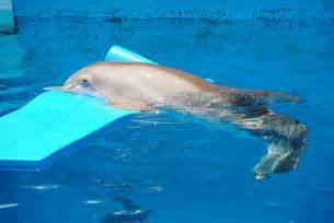 Winter Dolphin Clearwater Aquarium