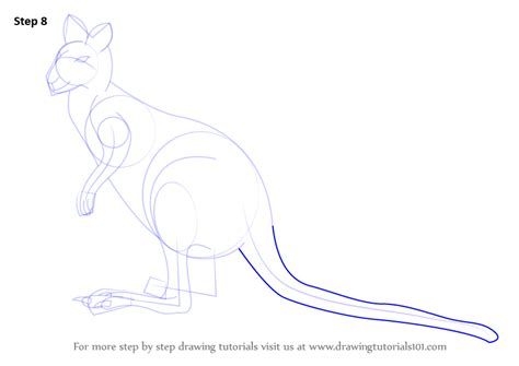 learn   draw  agile wallaby wild animals step