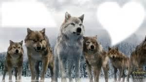 faire part de mariage gratuit montage photo meute de loup pixiz