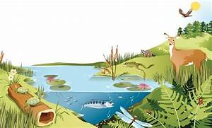 picture of a lake with animals | pond ecosystem in science ...