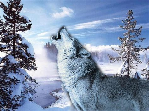 Beautiful Nature Animal Wallpapers - beautiful nature images animals wallpaper photos 23445761