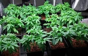 Led Grow Erfahrung : wie viele pflanzen in den growroom 1000seeds ~ Watch28wear.com Haus und Dekorationen