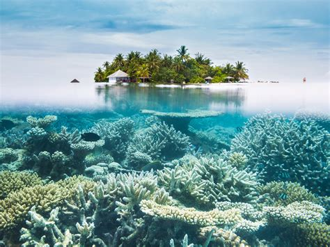 climate change snorkeling island warming beaches global beach places maldives ocean most coral reef water islands underwater sea effects pollution