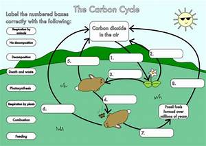 Carbon Cycle Diagram To Label