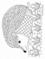 Hedgehog Coloring Adult Pages Animal Fall Printable Cute Sheets Activities Mandala Woojr Pattern Print Igel Colour Only Simple Colors Designs sketch template