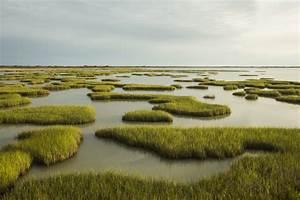 Coastal  Non-deltaic Wetlands And Sea Level Rise