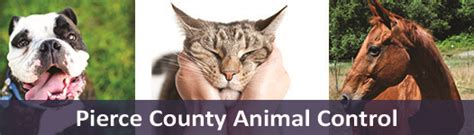 pierce county wa official website animal control home