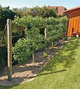 Obst Und Beerenfrchte Aus Dem Eigenen Garten