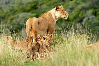 Africa African Safari 1080p Wallpapers 4k Desktop