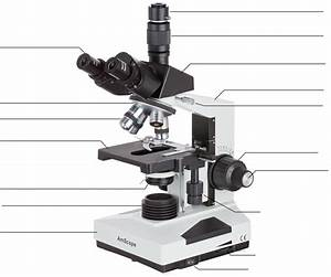 Blank Compound Light Microscope Diagram