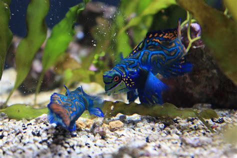 big data   aquarium trade sustainable