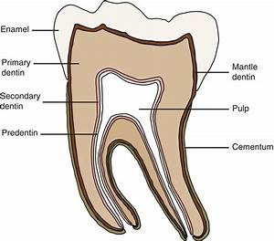5  Dentin  Pulp  And Tooth Pain