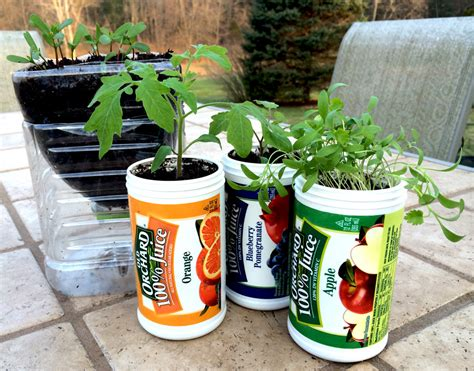 Reuse Old Orchard Juice Containers To Plant Seedlings