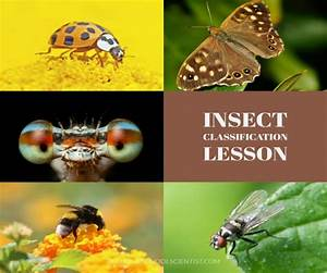 Insect Printable Worksheet
