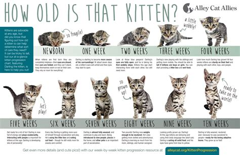 What To Do If You Find A Stray Cat Or Kittens Care Cat