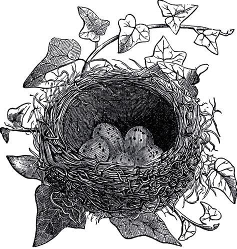 antique bird nest illustration  graphics fairy