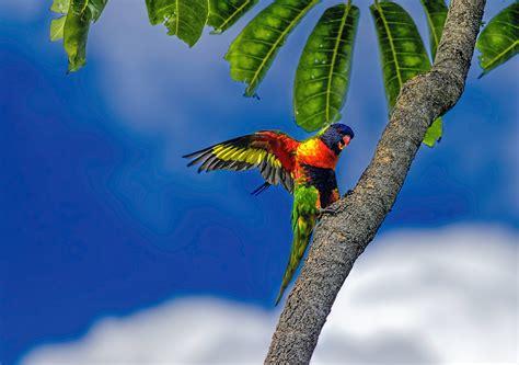 birds animals parrot plants Wallpapers HD / Desktop and ...