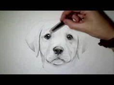 Bilder Zeichnen Für Anfänger : die 145 besten bilder von hund zeichnen in 2019 drawings felt animals und felt art ~ Frokenaadalensverden.com Haus und Dekorationen