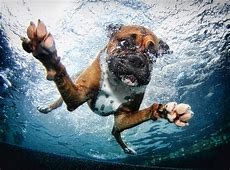 Guy Took Photos Of Dogs Underwater And The Results Are