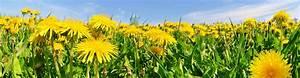 Traitement Mauvaise Herbe : traitement des mauvaises herbes et entretien de pelouse qu bec ~ Melissatoandfro.com Idées de Décoration
