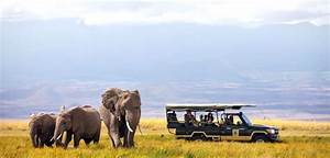 Top Destinations in Africa for Safari Trips | African ...