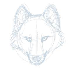 Wolf Head Drawings Sketches