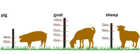 electric fence wire fencing height guidelines electric fence