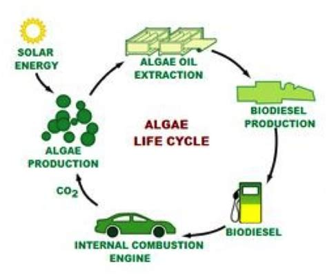 Biofuel Engine Diagram by Algae As Energy A Look To The Future Climate Energy