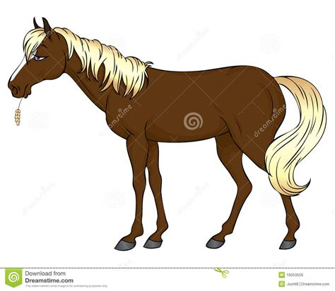 horse cartoon royalty  stock images image