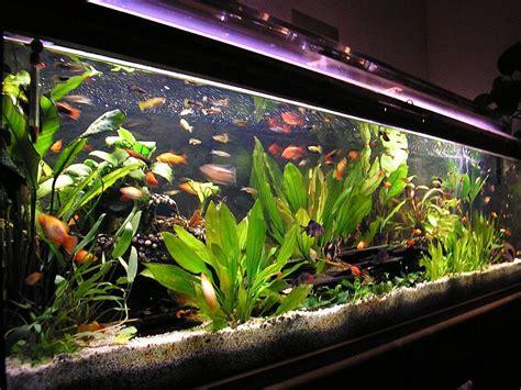mein 500 liter aquarium aquariumforum de bildergalerie
