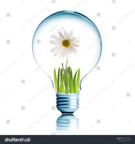 light bulb with soil and white flower plant inside stock