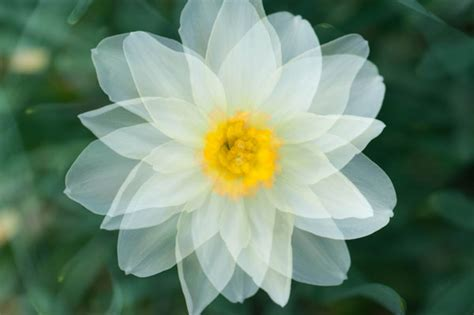 unique flower photography  multiple exposures