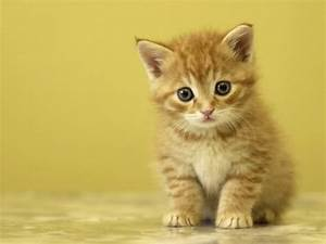 Proxecto Gato: Really Cute Cats and Kittens