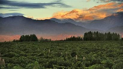 Mendoza Argentina Wine Vineyards Vineyard Bousquet Chile
